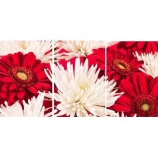 Red & White Chrysanthemum Flower Set of 3 Canvas Wall Art